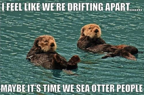 I feel like we're drifting apart... Maybe it's time we see otter people